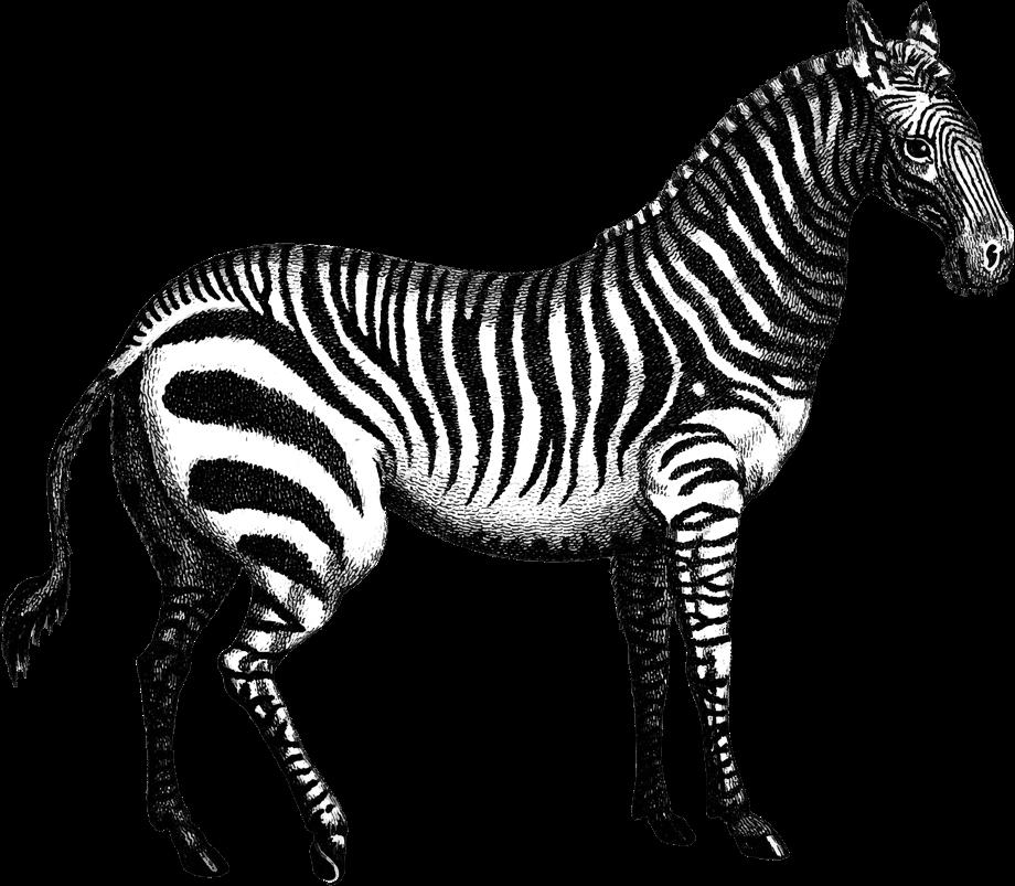 tijger-zebra